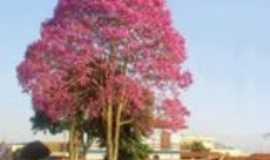 São Miguel Arcanjo - Ipê roxo maravilhoso., Por NAzaré Domingues